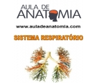 Sistema Respirat�rio